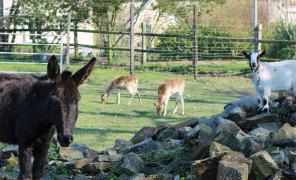 promenez-vous sur la ferme et rencontrez nos animaux