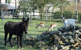 parc-animalier